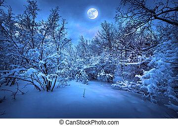 אור ירח, עץ, חורף, לילה