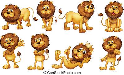 אמיץ, אריות