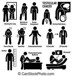 אשכים, *אשכי, testicles, סרטן
