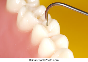 בחינה של השיניים