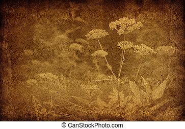 בציר, תקציר, פרחים, רקעים, יער