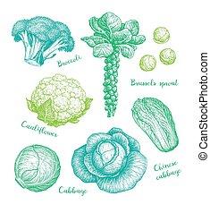 גדול, אוסף, cabbage.