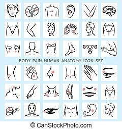 גוף, אנטומיה, כאב, בן אנוש, איקונים