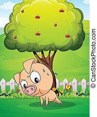 דובדבן, מתחת, עץ, להתאמן, חזיר