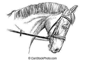 דמות, רסן, סוס