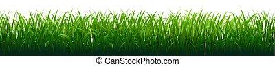 דשא ירוק, גבול