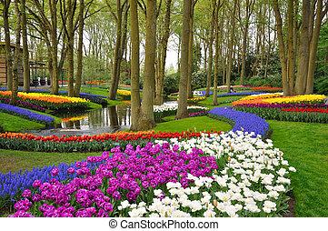 הולנד, צבעוני, צבעוניים, חנה, ללבלב, קיאקאנהוף