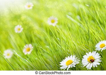 העתק, חינניות, לאדיבירד, פסק, זה, בהיר, דמות, דשא, -, מישהו, רקע, עזוב, פרחים, יום, טשטשני, תמוך