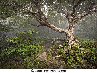 הרים כחולים, טרוש, רכס, מפחיד, פאיריטאל, נ.כ., עץ, מפחיד, פנטזיה, אשאויל, ערפל, יער, appalachian, צפון, גנים, נוף, קרוליינה