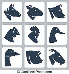 וקטור, בעלי חיים, sheep, פרה, מבויית, איקונים, חזיר, כפוף, עוף, אווז, תרנגול, goat, set:, סוס