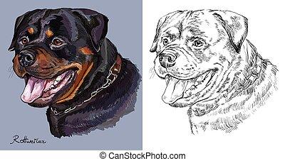 וקטור, בצבע אחד, דמות, ציור, העבר, צבעוני, rottweiler.