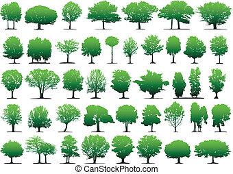וקטור, עצים