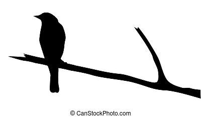 וקטור, צללית, צפור, ענף