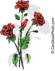 ורדים, אדום