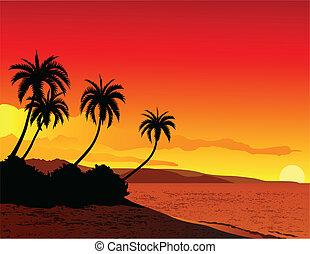 חוף טרופי, דוגמה