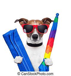 חופשות, כלב, קיץ