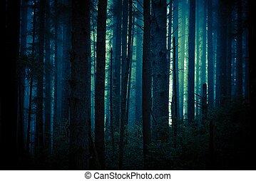 חושך, יער, מפחיד