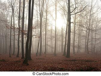 חושך, יער