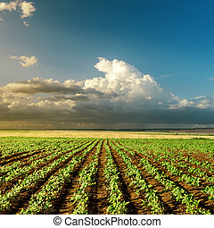 חקלאות, ירוק, תחום של שקיעה