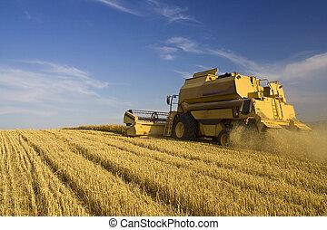 חקלאות, -, שלב