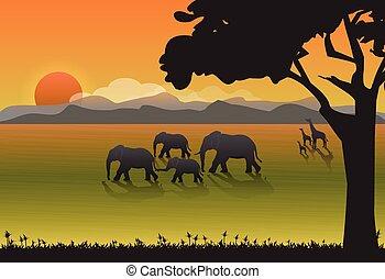 טבע, רקע, פילים, meadow., משפחה, ג'ירפה