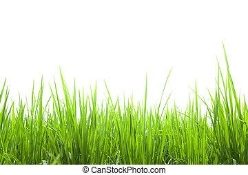 טרי, לבן, דשא, ירוק, הפרד