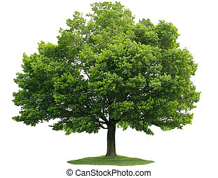 יחיד, עץ
