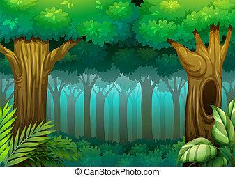 יער, עמוק