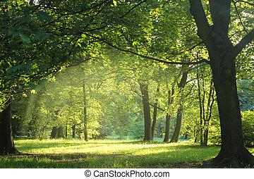 יער, קיץ, עצים