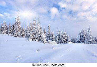 יפה, חורף, עצים., שלג כיסה, נוף