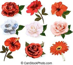 יפה, קבע, הפרד, רקע., vector., פרחים לבנים