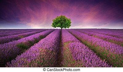 יפה, קיץ, לעמת, דמות, עץ, תחום של אזובין, צבעים, שקיעה, נוף, אופק, יחיד