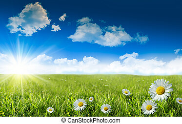 כחול, דשא פראי, שמיים, חינניות
