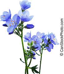 כחול, וואטארכולור, פרחים