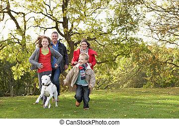 ללכת, משפחה, חנה, צעיר, כלב, דרך, בחוץ
