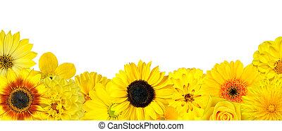 מבחר, קרקע, הפרד, פרחים צהובים, שיט