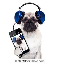מוסיקה, כלב