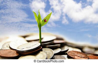 מושג, כספי, מטבעות, -, גידול, חדש