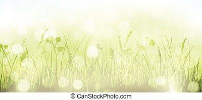 נקודות, קפוץ, שמיים, דשא, bokeh, רקע ירוק, אור, טשטשני