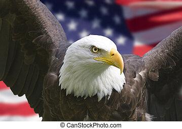 נשר, דגל אמריקאי
