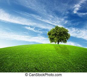 סביבה, ירוק