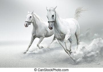 סוסים לבנים