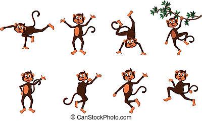 סידרה, מצחיק, קוף, חמוד