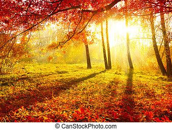 סתווי, עצים, leaves., סתו, park., נפול