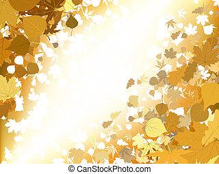 סתו, אור, רקע., הכנסה לכל מניה, 8