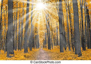 סתו, nature., יער