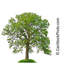 עץ, הפרד