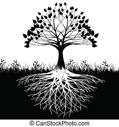 עץ, שורשים, צללית