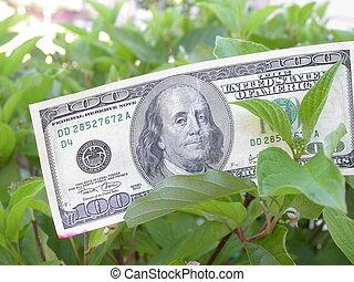 עץ של כסף
