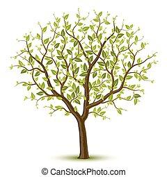 עץ, leafage, ירוק